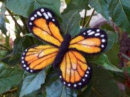 mariposa-naranja-producto-1506619207.jpg